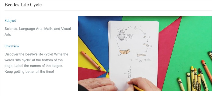 Beetles Life Cycle screen shot from Drawn To Discover review at Castle View Academy
