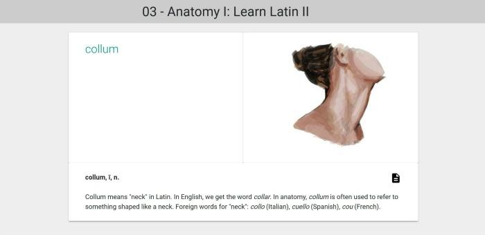 Latin anatomy - collum