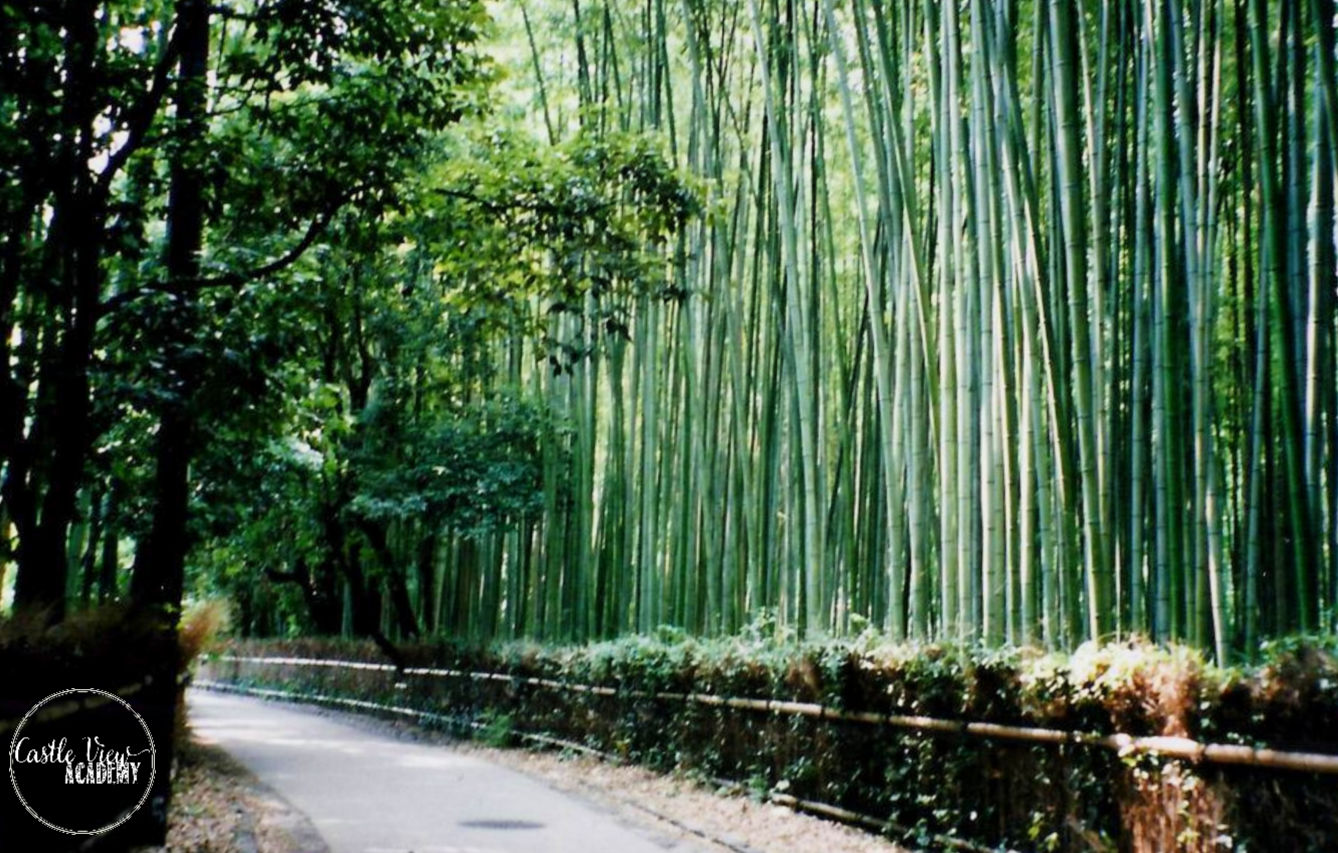 Arashiyama Bamboo Grove, Kyoto, by Castle View Academy homeschool