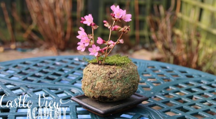Castle View Academy's Spring Bonsai