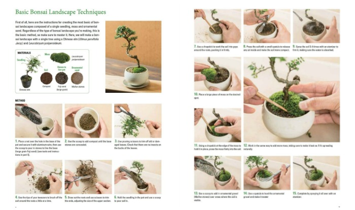 Learn basic bonsai landscaping