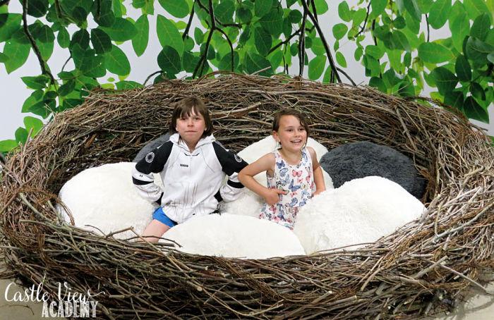 Giant Nest at JoyLab Regina