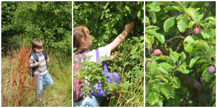 Foraging for fruit with Castle View Academy homeschool
