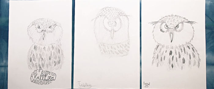 Hoot Owl pencil drawing online art lesson