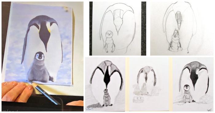 Penguin Family pencil drawings for an online art program