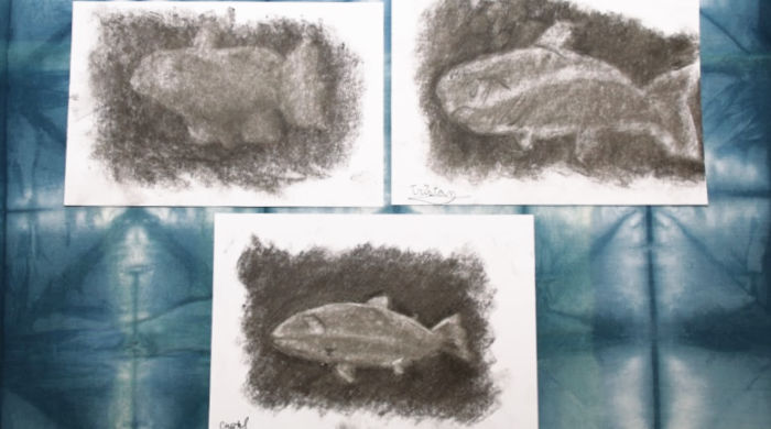 Trout drawings from Creating a Masterpiece by Castle View Academy