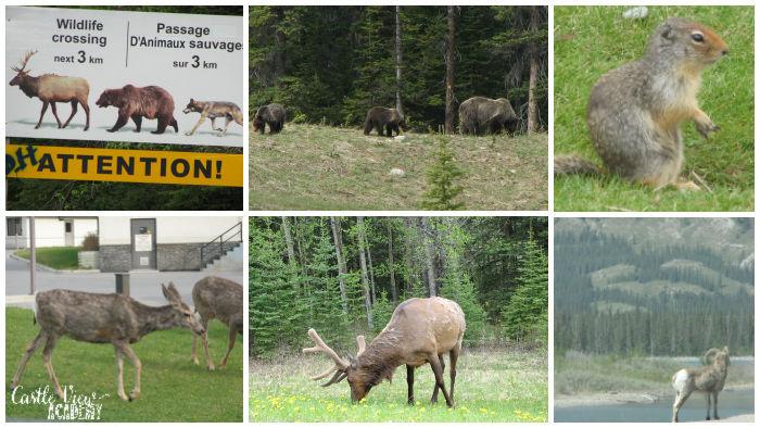 Wildlife of Southern Alberta