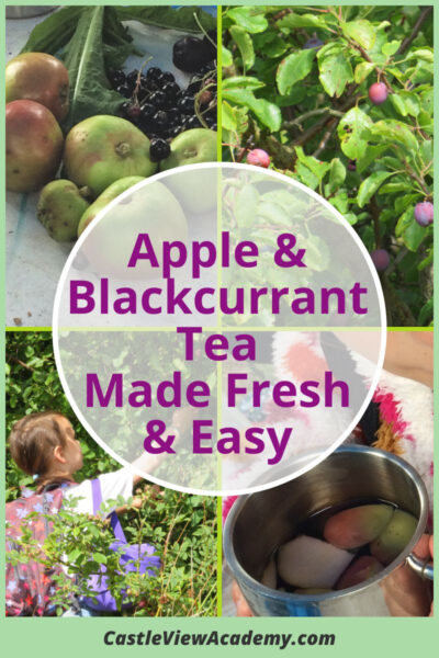 Foraged apple and blackcurrant tea made fresh