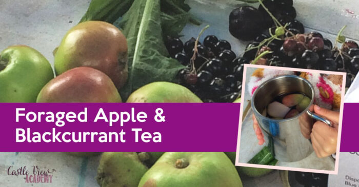 Foraged apple & blackcurrant tea