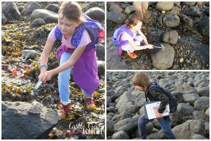 Hammering rocks, relaxed homeschool science